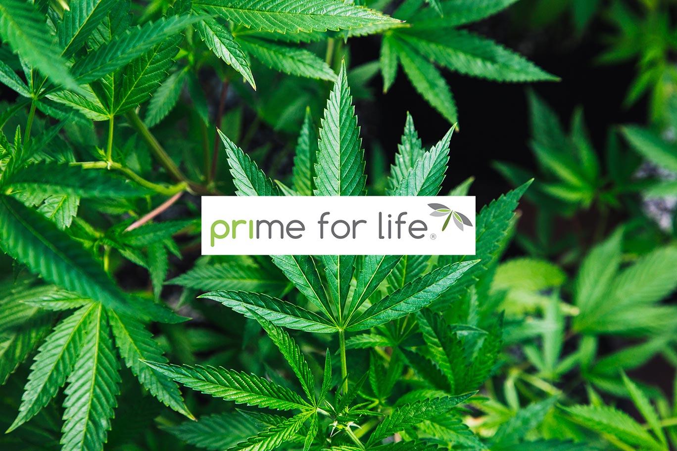 420 Marijuana Course